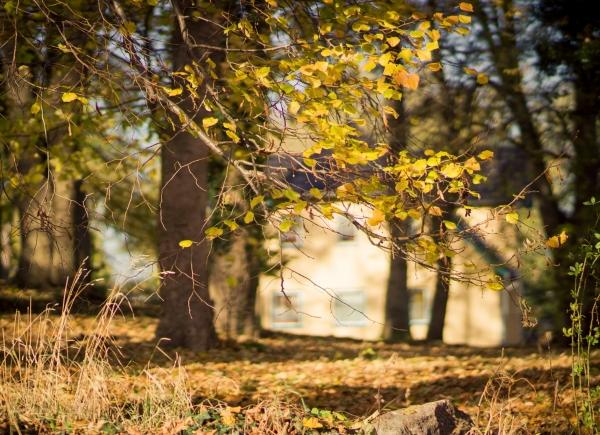 herbstbaum-krummin
